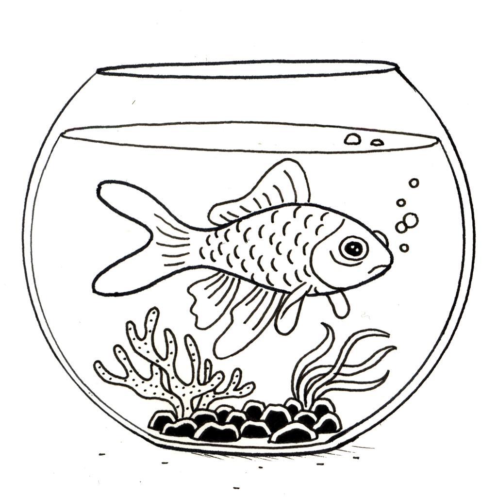 Croquis de poisson rouge dans son bocal source http for Bocal poisson rouge