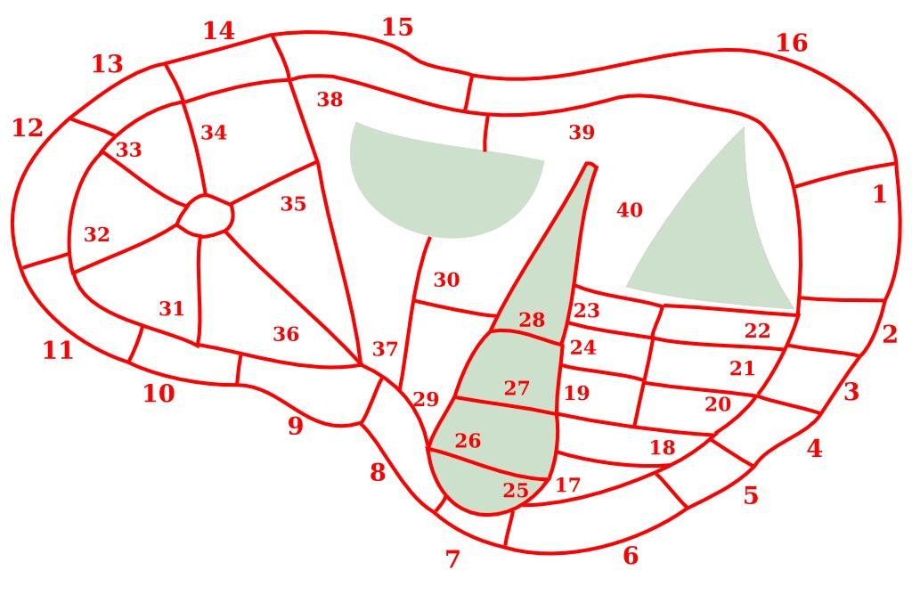 releve-des-inscriptions-etrusques-du-foie-de-plaisance-554cc2be.jpg