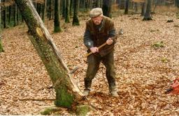 Abattage d'un arbre. Source : http://data.abuledu.org/URI/51560052-abattage-d-un-arbre