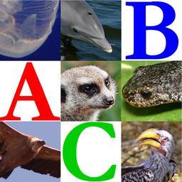 Abécédaire des animaux de Wikijunior. Source : http://data.abuledu.org/URI/533205f1-abecedaire-des-animaux-de-wikijunior