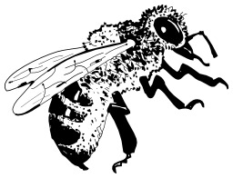 Abeille. Source : http://data.abuledu.org/URI/50205a8a-abeille