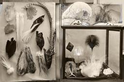 Accessoires en plumes d'autruche en 1919. Source : http://data.abuledu.org/URI/53879c92-accessoires-en-plumes-d-autruche-en-1919