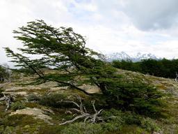 Action du vent sur un arbre. Source : http://data.abuledu.org/URI/5542ab31-action-du-vent-sur-un-arbre