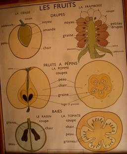Affiche scolaire sur les fruits. Source : http://data.abuledu.org/URI/55be2ab1-affiche-scolaire-sur-les-fruits