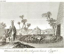 Agriculture égyptienne en 1799. Source : http://data.abuledu.org/URI/591e35e1-agriculture-egyptienne-en-1799
