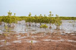 Agriculture en Casamance. Source : http://data.abuledu.org/URI/549349a7-agriculture-en-casamance