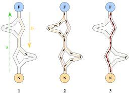 Algorithme des fourmis. Source : http://data.abuledu.org/URI/534b8e19-algorithme-des-fourmis