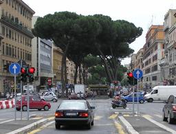 Allée de pins parasols à Rome. Source : http://data.abuledu.org/URI/539cb7ea-allee-de-pins-parasols-a-rome