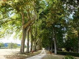 Allée de platanes en Dordogne. Source : http://data.abuledu.org/URI/510b14b9-allee-de-platanes-en-dordogne