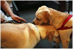 Amitié canine. Source : http://data.abuledu.org/URI/5339a8d1-amitie-canine