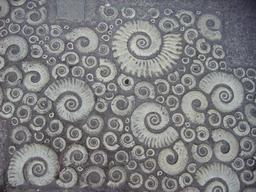 Ammonites et pierre de Coade. Source : http://data.abuledu.org/URI/551c5a6a-ammonites-et-pierre-de-coade
