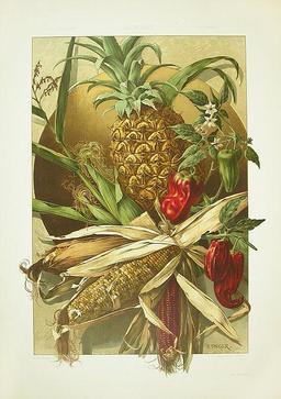 Ananas, maïs et poivrons. Source : http://data.abuledu.org/URI/50fabc13-ananas-mais-et-poivrons