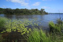 Anse du lac de Biscarrosse. Source : http://data.abuledu.org/URI/55c120ef-anse-du-lac-de-biscarrosse