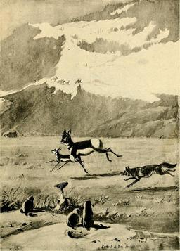 Antilopes et coyote. Source : http://data.abuledu.org/URI/587ea3d0-antilopes-et-coyote