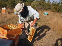 Apiculteur. Source : http://data.abuledu.org/URI/51ac7235-apiculteur-