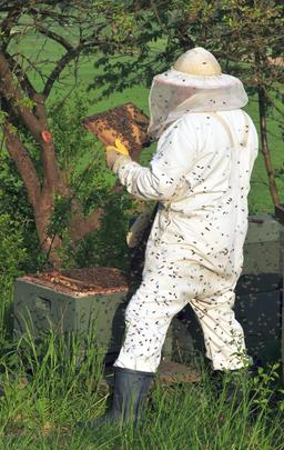 Apiculteur. Source : http://data.abuledu.org/URI/51e06637-apiculteur