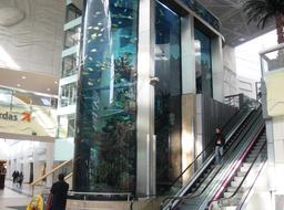 Aquarium géant dans un supermarché. Source : http://data.abuledu.org/URI/530dc23e-aquarium-geant-dans-un-supermarche