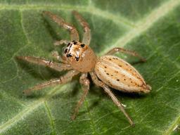 Araignée. Source : http://data.abuledu.org/URI/5020ec69-araignee