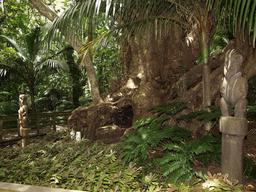 Arbre-cimetière en Nouvelle-Zélande. Source : http://data.abuledu.org/URI/53ac63a9-arbre-cimetiere-en-nouvelle-zelande