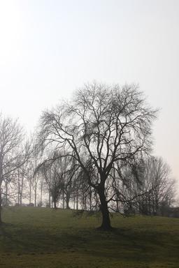 Arbre en hiver. Source : http://data.abuledu.org/URI/59078bee-arbre-en-hiver
