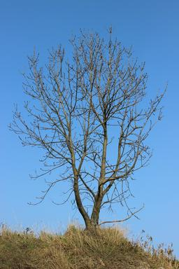 Arbre en hiver. Source : http://data.abuledu.org/URI/59078e78-arbre-en-hiver