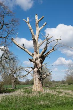 Arbre mort en Écosse. Source : http://data.abuledu.org/URI/58751040-arbre-mort-en-ecosse