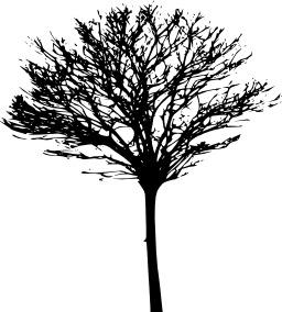 Arbre sans feuilles. Source : http://data.abuledu.org/URI/5047bdfd-arbre-sans-feuilles