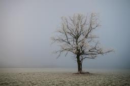 Arbre solitaire sous la neige en Autriche. Source : http://data.abuledu.org/URI/54cd049b-arbre-solitaire-sous-la-neige-en-autriche