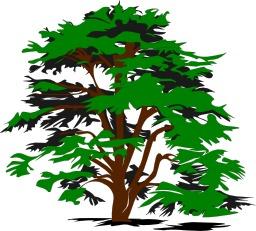 Arbre vert. Source : http://data.abuledu.org/URI/5407821c-arbre-vert
