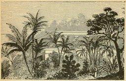 Arbres de serre. Source : http://data.abuledu.org/URI/524f18b5-arbres-de-serre