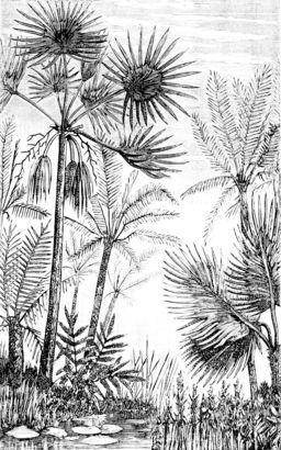 Arbres et branches du tertiaire européen. Source : http://data.abuledu.org/URI/501ed0d0-arbres-et-branches-du-tertiaire-europeen