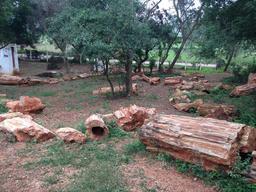 Arbres fossiles en Inde. Source : http://data.abuledu.org/URI/551c528a-arbres-fossiles-en-inde