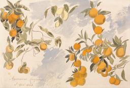 Arbres fruitiers. Source : http://data.abuledu.org/URI/520e8e37-arbres-fruitiers