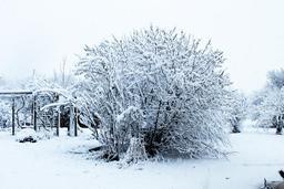 Arbres sous la neige dans un jardin. Source : http://data.abuledu.org/URI/54d101fd-arbres-sous-la-neige-dans-un-jardin