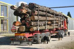 Arrivée d'un chargement de grumes. Source : http://data.abuledu.org/URI/51a13418-arrivee-d-un-chargement-de-grumes