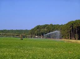 Arrosage d'un champ de haricots. Source : http://data.abuledu.org/URI/503945fe-arrosage-d-un-champ-de-haricots
