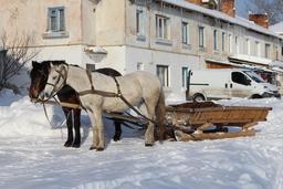 Attelage dans la neige. Source : http://data.abuledu.org/URI/588ca3cc-attelage-dans-la-neige