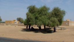 Attente à l'ombre à Ndiawara. Source : http://data.abuledu.org/URI/52e4ecd5-attente-a-l-ombre-a-ndiawara