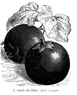 Aubergine ronde de Chine. Source : http://data.abuledu.org/URI/544f185a-aubergine-ronde-de-chine