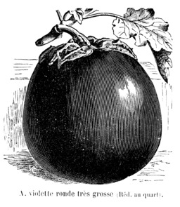Aubergine violette ronde très grosse. Source : http://data.abuledu.org/URI/544f1978-aubergine-violette-ronde-tres-grosse