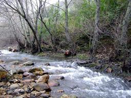Aulnes en bordure d'un ruisseau. Source : http://data.abuledu.org/URI/505baded-aulnes-en-bordure-d-un-ruisseau