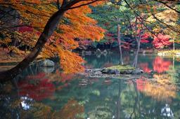 Automne à Kyoto. Source : http://data.abuledu.org/URI/527853d7-automne-a-kyoto