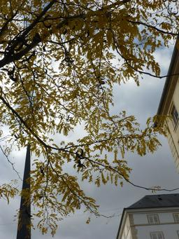 Automne autour du marché couvert de Nancy. Source : http://data.abuledu.org/URI/581a40de-automne-autour-du-marche-couvert-de-nancy