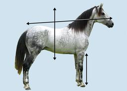 Axes d'orientation d'un cheval. Source : http://data.abuledu.org/URI/531af7b5-axes-d-orientation-d-un-cheval