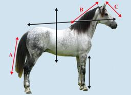Axes d'orientation d'un cheval. Source : http://data.abuledu.org/URI/531af8be-axes-d-orientation-d-un-cheval
