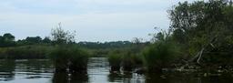 Balade en barque à Biscarrosse. Source : http://data.abuledu.org/URI/55abd61f-balade-en-barque-a-biscarrosse