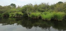 Balade en barque à Biscarrosse. Source : http://data.abuledu.org/URI/55abd672-balade-en-barque-a-biscarrosse