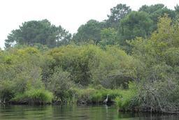 Balade en barque à Biscarrosse. Source : http://data.abuledu.org/URI/55abec7c-balade-en-barque-a-biscarrosse