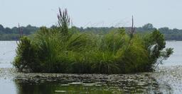 Balade en barque à Biscarrosse. Source : http://data.abuledu.org/URI/55abf3d0-balade-en-barque-a-biscarrosse