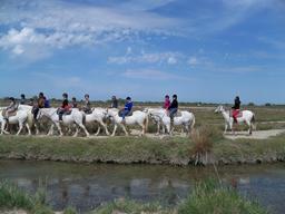 Balade équestre en Camargue. Source : http://data.abuledu.org/URI/56d5dc36-balade-equestre-en-camargue
